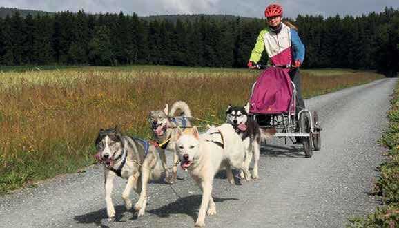 Echt Oberfranken Huskies