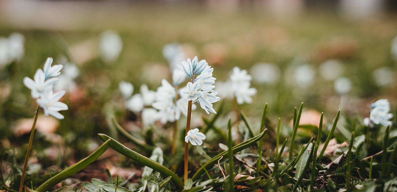 Erste Frühlingsblüher in der Eremitage Bayreuth