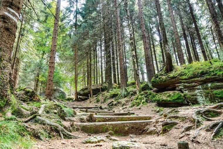 Wildes Oberfranken – Wild und Wald