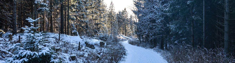 Winterspaziergang am Schneeberg